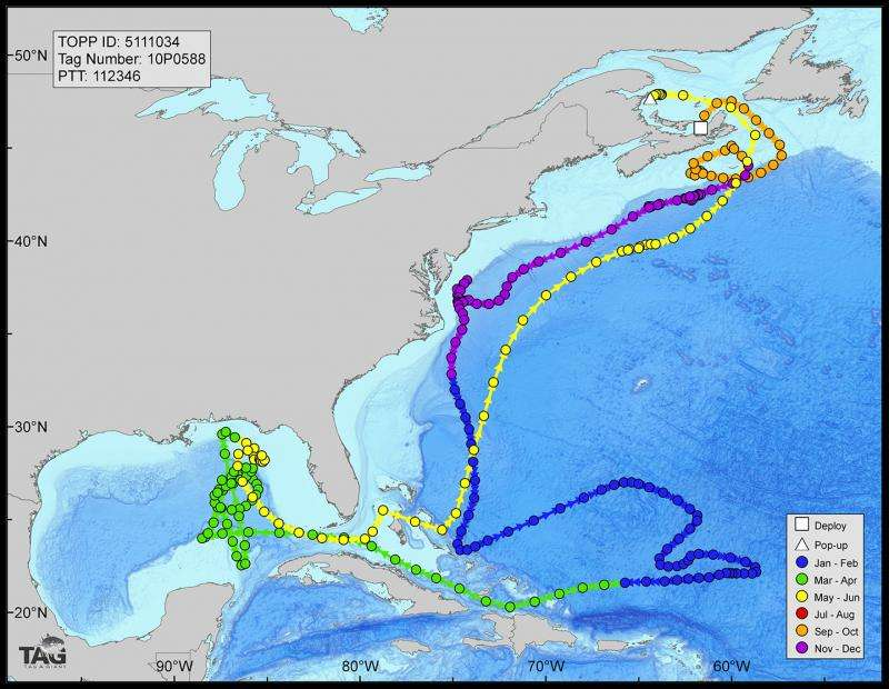 Deepwater Horizon oil spill impacted bluefin tuna spawning habitat in Gulf of Mexico