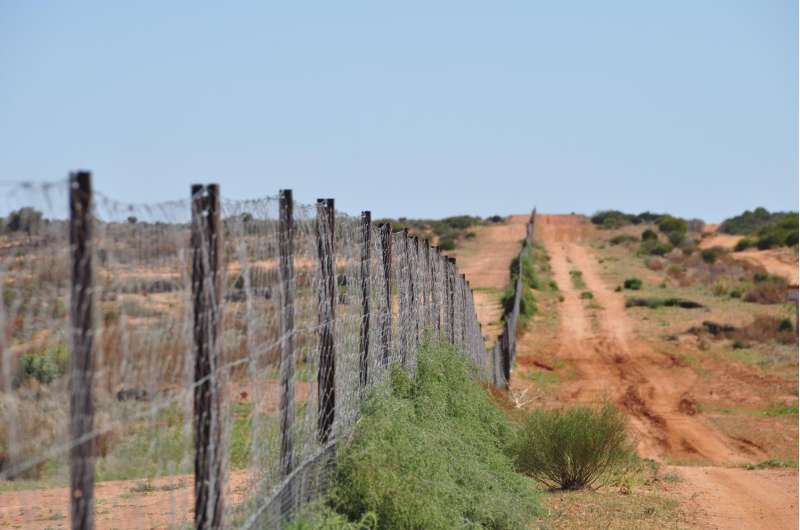 Detective work across dingo fence reveals new factor in woody shrub invasion