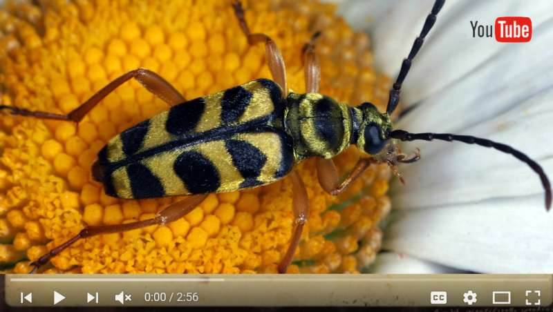 ESA announces finalists for the 2016 YouTube Your Entomology contest
