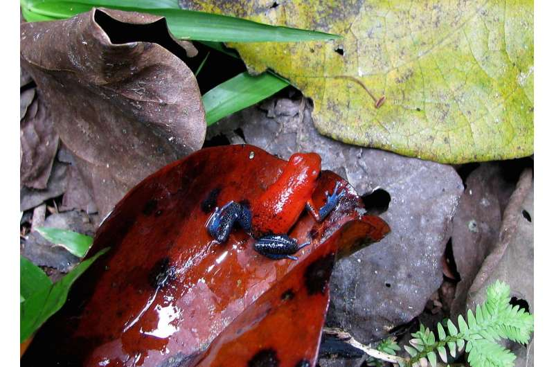 Frogs that can take the heat expected to fare better in a changing world