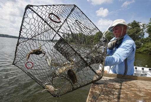 Goodbye, herring? Biotech bait gives lobstermen alternative