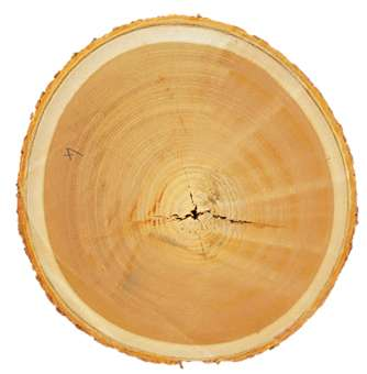 How wood chemistry relates to structural stability
