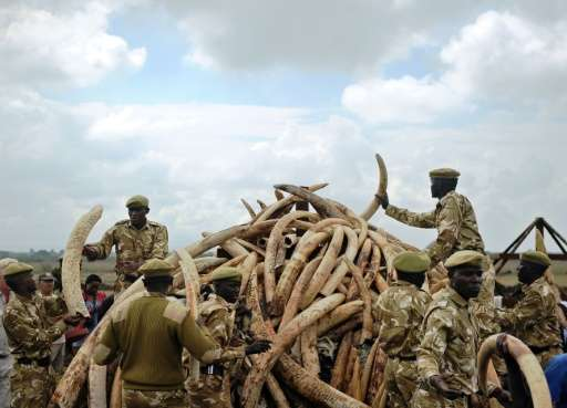 Kenya Wildlife Services (KWS) rangers prepare a pyre in preparation for a burning of tonnes of ivory, rhino-horn and other confi