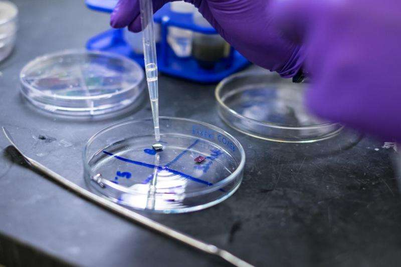 Metal-free fluorinated graphene shows no signs of toxicity in cell culture tests