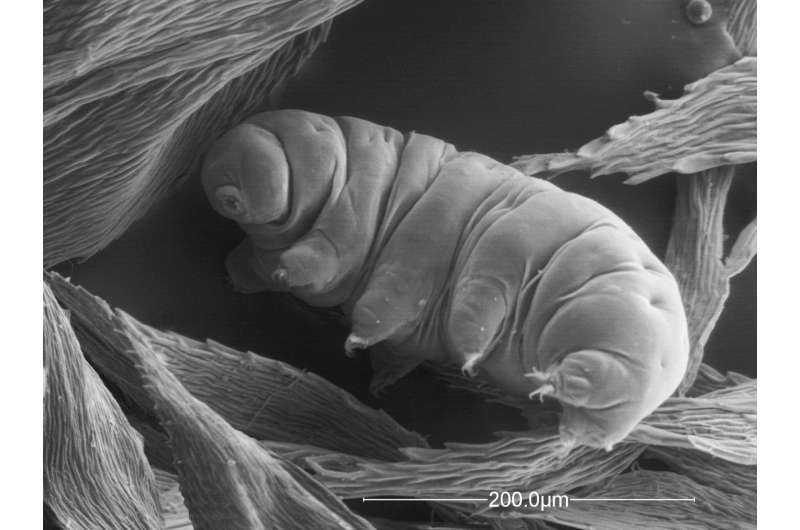 Nematodes and tardigrades, and dung beetles, oh my!