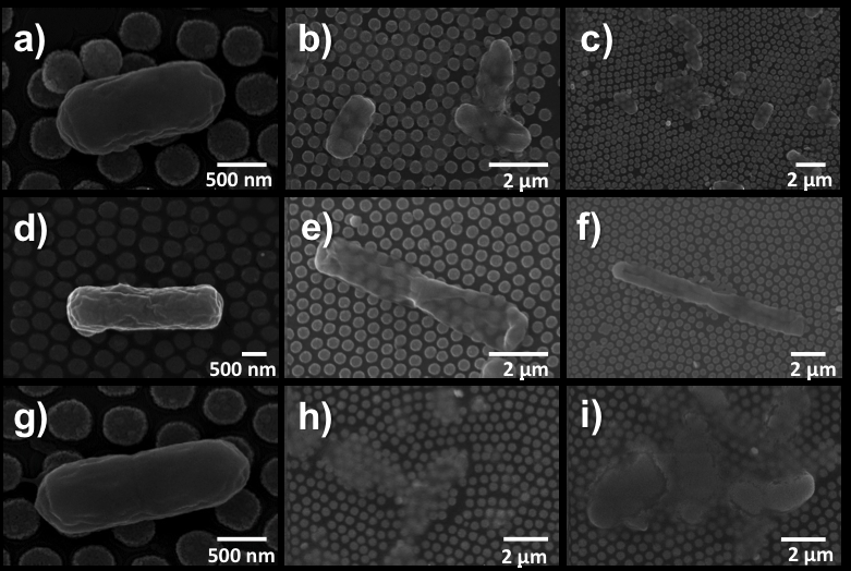New technique for rapidly killing bacteria using tiny gold disks and light