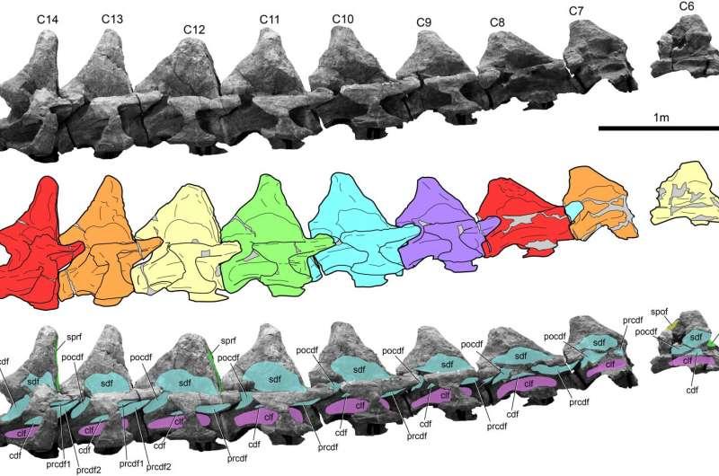 Perot Museum's research on massive vertebrae sheds new light on Alamosaurus sanjuanensis