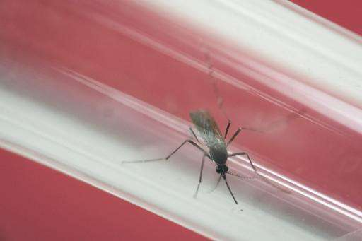 Puerto Rico reports 10,690 Zika cases amid ongoing epidemic