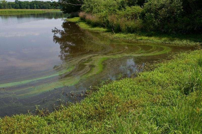 Rainfall variation complicates nitrogen runoff management