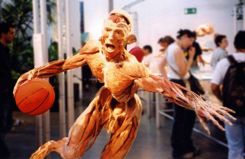 Reconsidering Body Worlds—why do we still flock to exhibits of dead human beings?