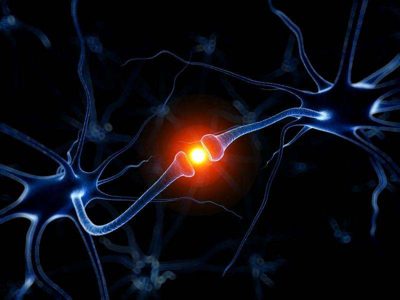 Regenerating brain tissue brings hope for a new treatment against Alzheimer's and Parkinson's