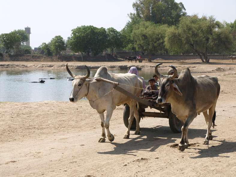 Rice farming in India much older than thought, used as 'summer crop' by Indus civilization