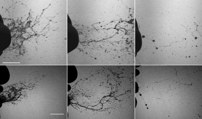 Sneezing produces complex fluid cascade, not a simple spray