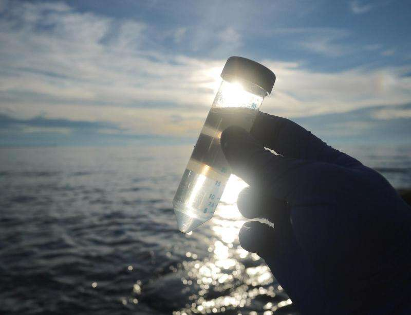 To understand the oceans' microbes, follow function, not form