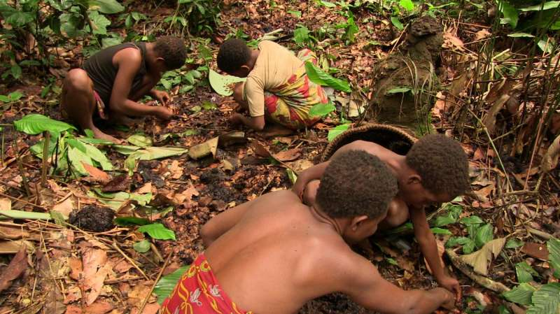 Tracing the path of pygmies' shared knowledge of medicinal plants
