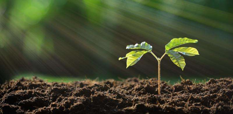 What you need to know about soil to keep your garden healthy