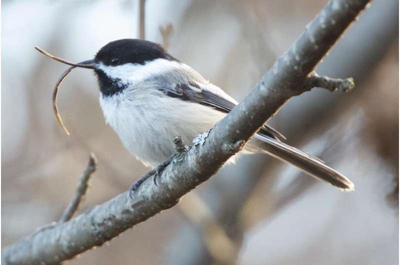 Newly discovered virus a prime suspect in often-fatal beak disorder spreading among birds