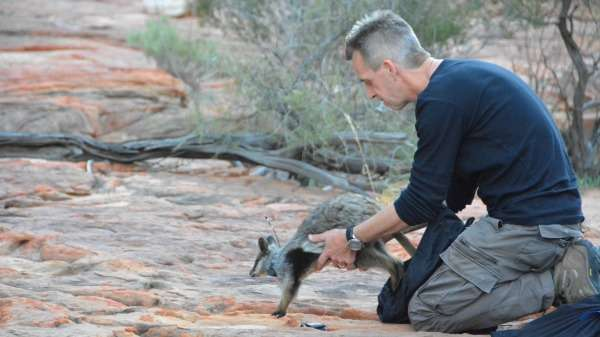23 new wallabies released into Kalbarri National Park