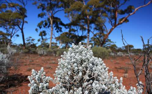 Research shows future heat waves a threat to Australia's plant life