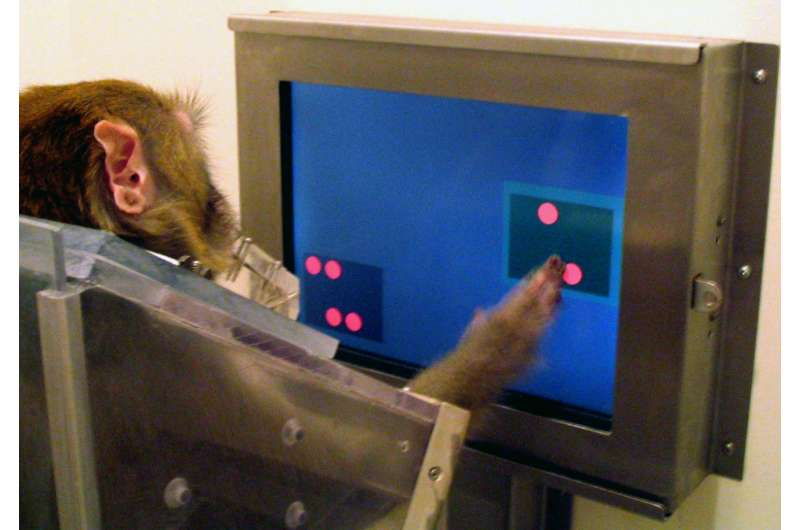 Researchers show humans and other animals can understand quantities, even without language
