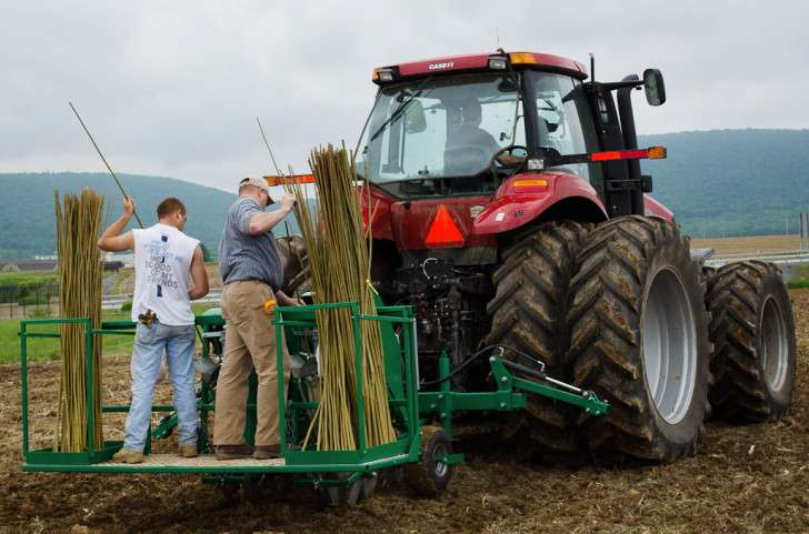 Experimental biomass harvest a step toward sustainable, biofuels-powered future