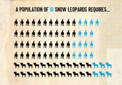 Food habits of snow leopards