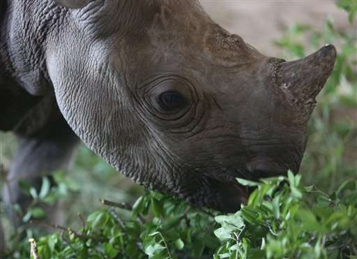 In South Africa, drones used to battle rhino poaching