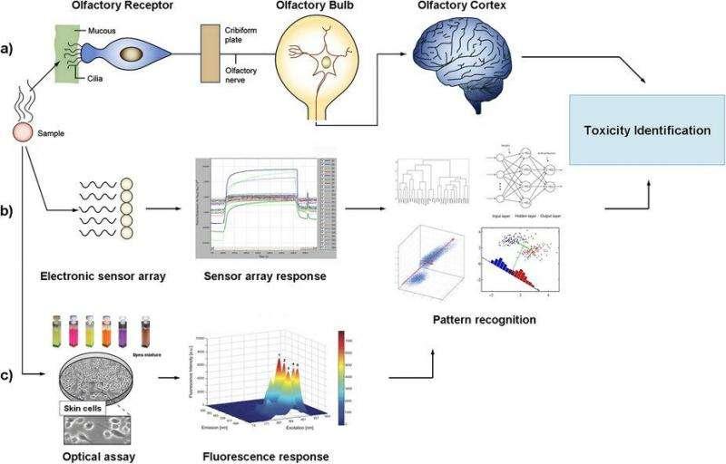 New approach for screening toxic chemicals mimics mammal senses