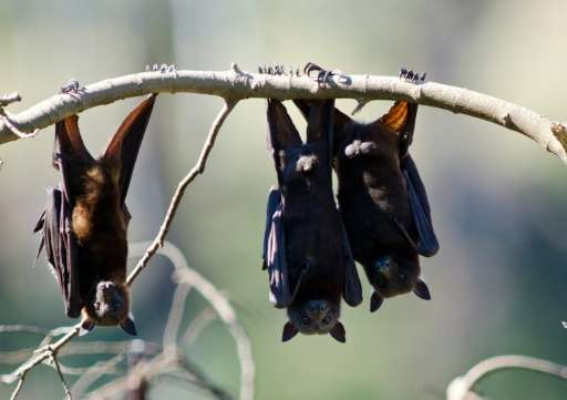 New research has found that 'ugly' animals such as bats attract less funding and investigation