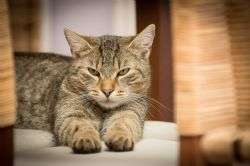 New research reveals 25 signs your cat could be in pain