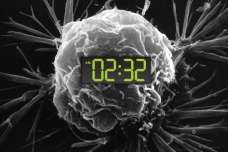 New study reveals a link between circadian clock disruption and tumor growth