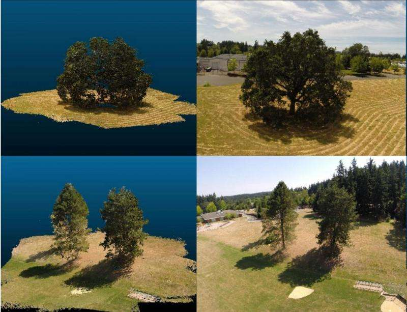 Researchers grow cyberforests to predict climate change