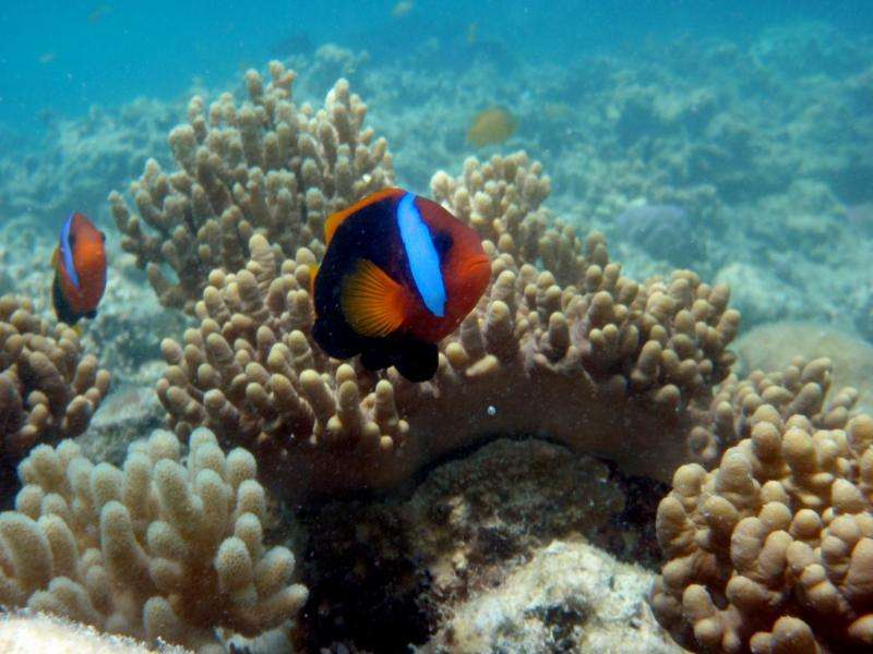 The world found Nemo, but can we save him?