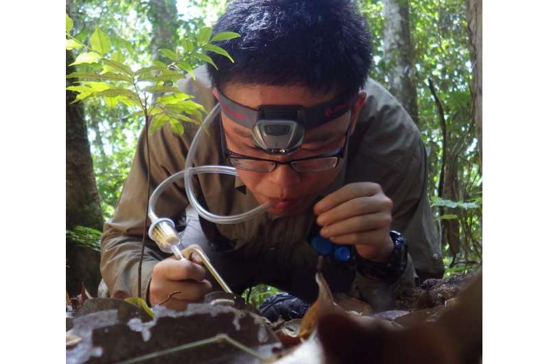 Unravelling the costs of rubber agriculture on biodiversity
