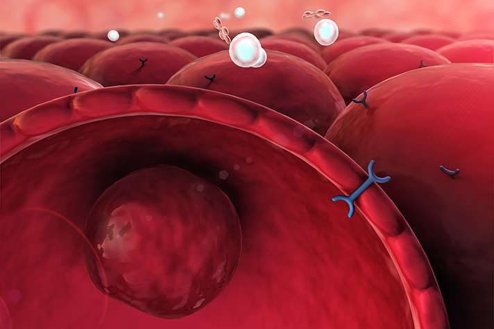 Study reveals protein to target in type 2 diabetes