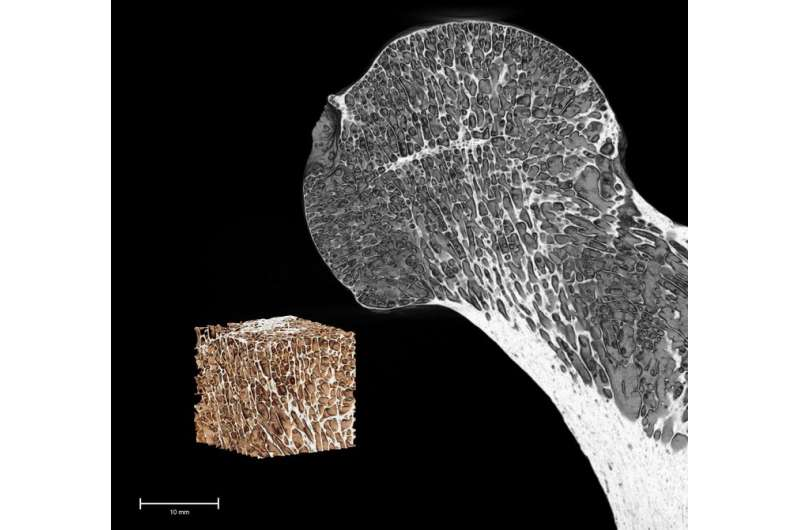 Researchers use IT to unlock the mysteries of human evolution