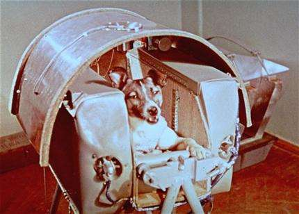 How many dogs have been to space?