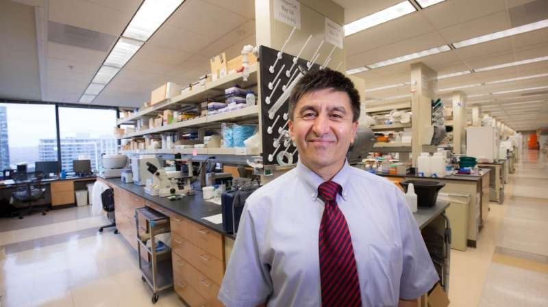 New research provides key insight about mitochondrial replacement therapy