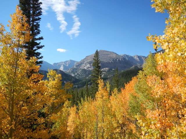 North American forests unlikely to save us from climate change, study finds
