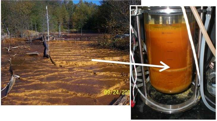Study looks at bacteria to remove metals from mine-impacted water