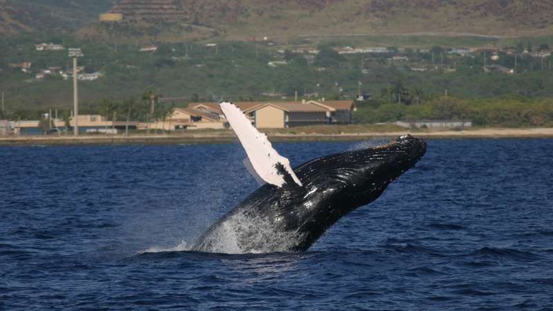 Study reveals previously unknown component of whale songs