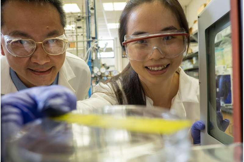 Rice University chemical engineers explore market for pure levoglucosan