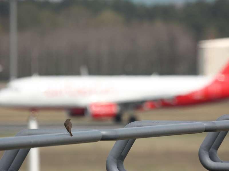 Singing in the flight lane