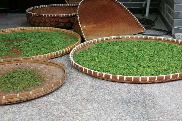 Climate change is affecting the growing and harvesting of tea