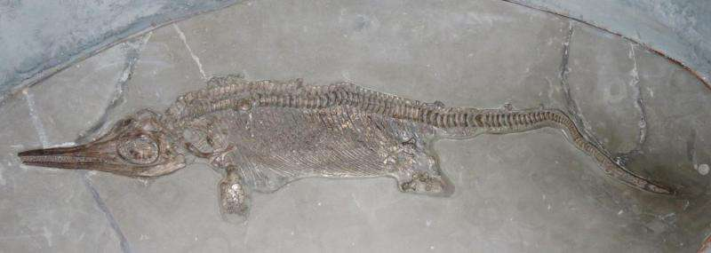 Secrets of 195-million-year old marine reptile uncovered