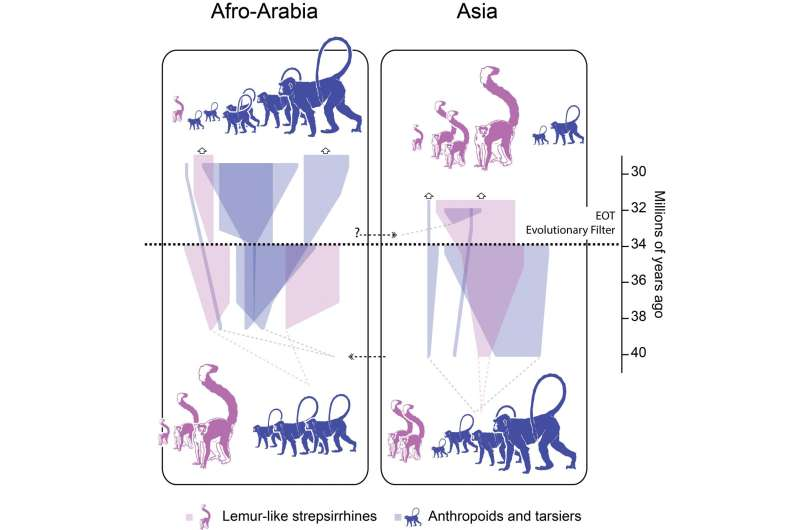 Six new fossil species form 'snapshot' of primates stressed by ancient climate change