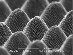 Lotus leaf inspires scientists to create world's first self-cleaning metals