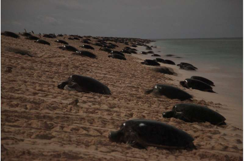 Too many turtles? Scientists may have solved the mystery of Raine Island