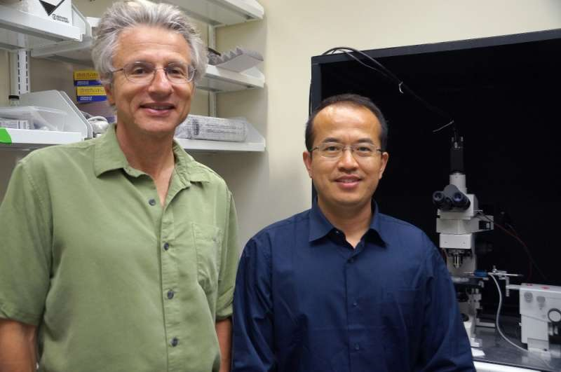 Team of biologists discovers cellular mechanism through which fruit flies sense food texture
