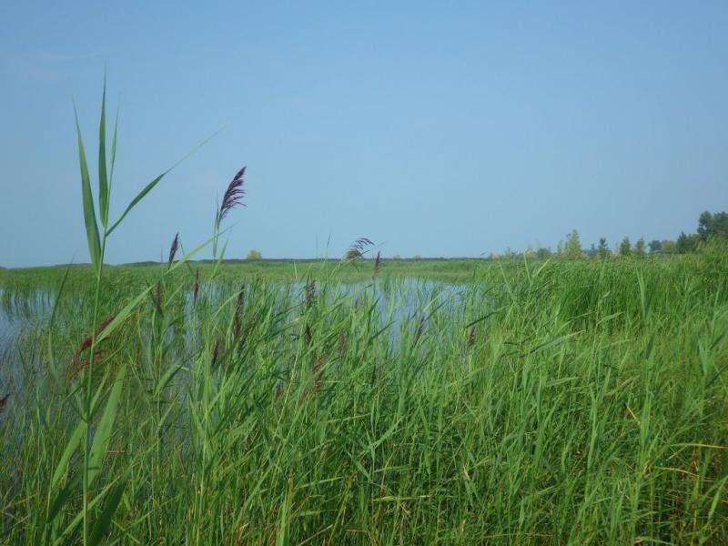 Fighting invasive species in michigan